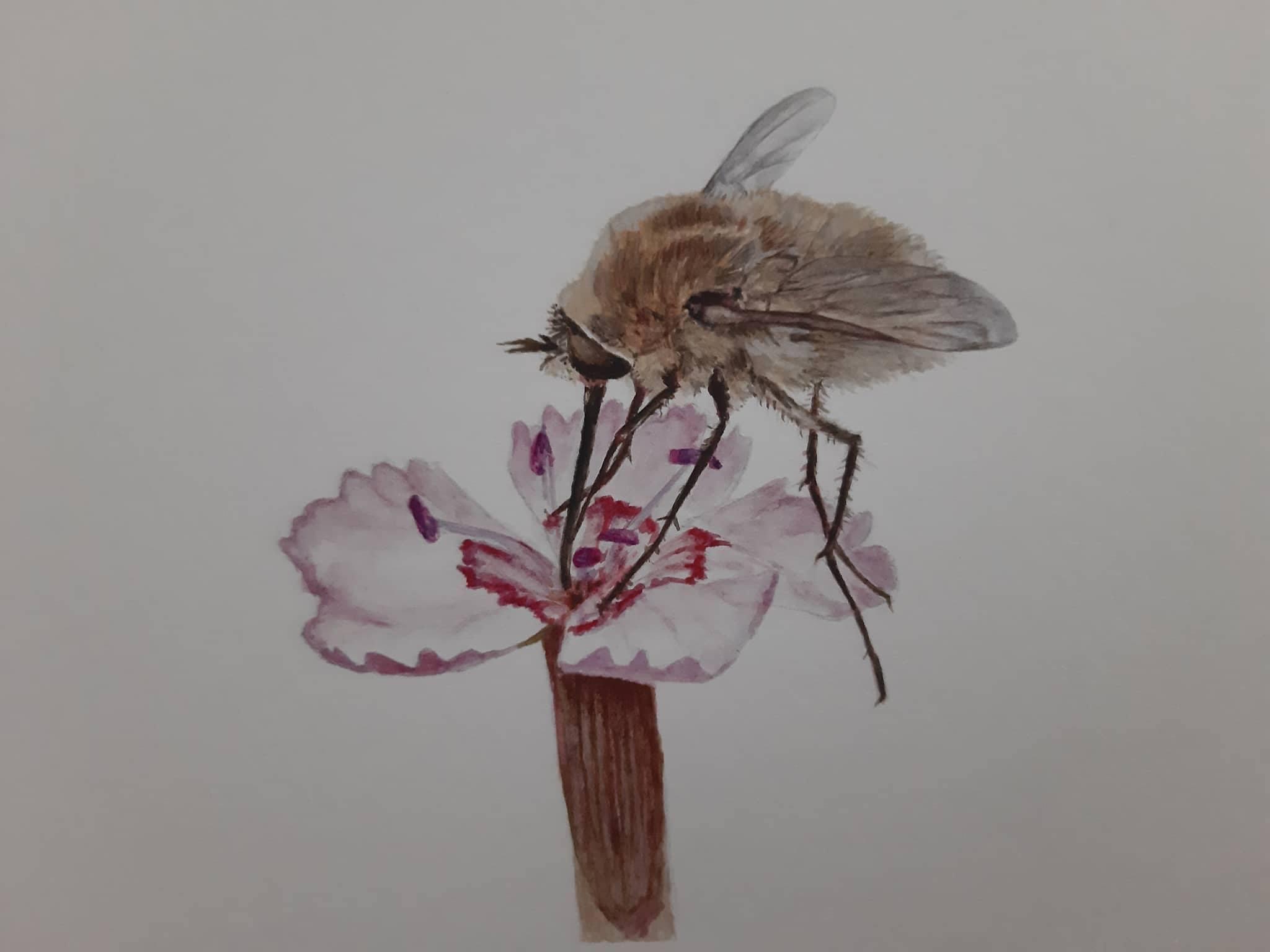 Kniha doplnená realistickými maľbami od Sylvie Pabst