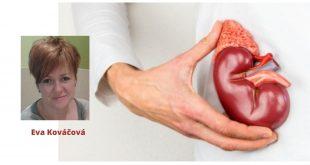Bielkovinové diéty, vplyv na zdravie a dialýza