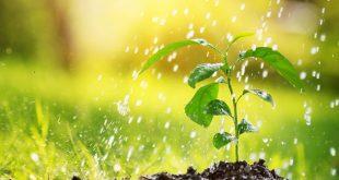 Pripravte si dažďovú vodu na zavlažovanie jarnej záhrady
